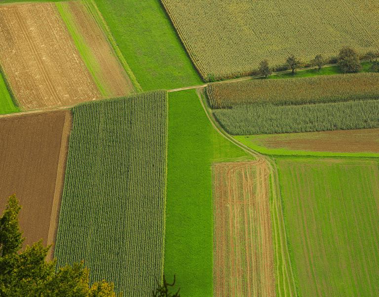 TechnoFarm Agricultural Administrative Software